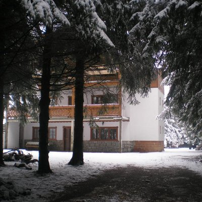 Foresta tribunale